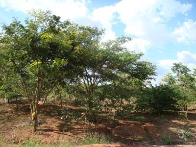 Foto meio ambiente 1